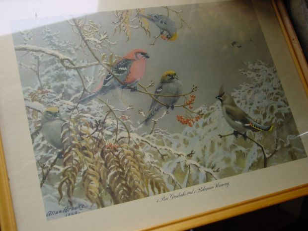Allan Brooks Grosbeaks and  Bohemian Waxwings