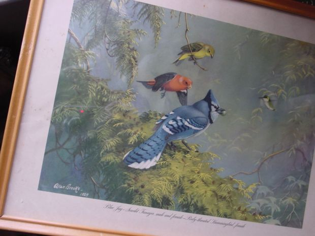 Allan Brooks Blue Jay Tanager and Hummingbird
